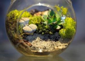 Terrarium_small