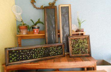 Stanley Homes Brevard custom homes indoor garden ideas